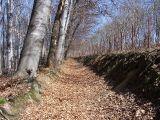 Las Wielki - przed Biskupicami