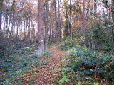 Szlak pogórski w lesie