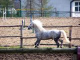 Siercza - stadnina koni